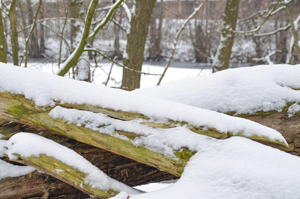sneeuwfoto's