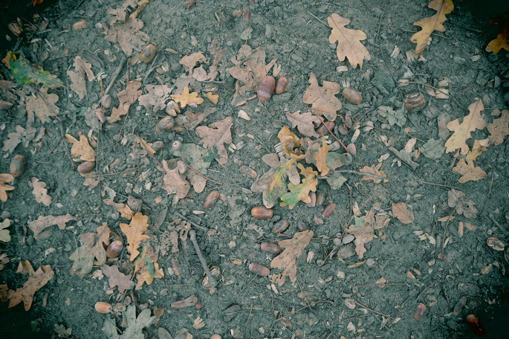 foto's van een mooie herfstwandeling