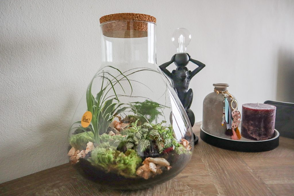 mini-ecosysteem-van-plant-rebelz